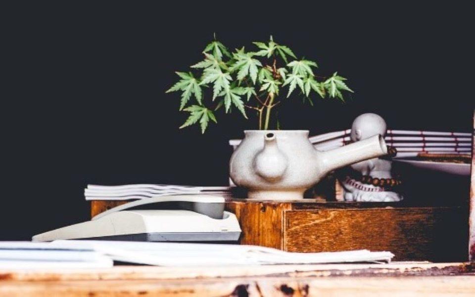 Situación regulatoria del cannabis y sus derivados